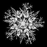 free-photo-snowflake-01
